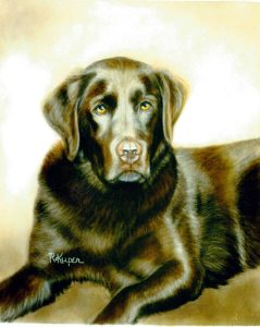 Chocolate Lab | 1st place in pastel (2010) Cody Country Art League