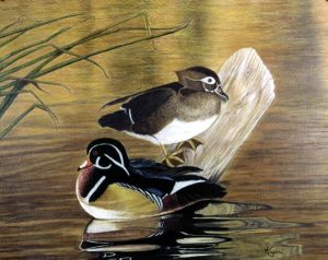 Wood Ducks (colored pencil) | Won 2nd Place in graphics Cody Country Art League