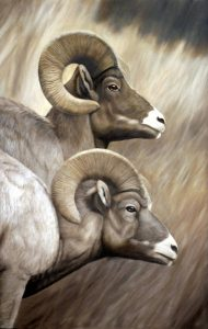 Yellowstone Rams (pastel) | Best of Wildlife Brown's Gallery Boise 2010 and Won Governor's Award 2010 (oil)